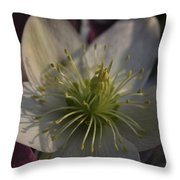 Light And Shadow Hellebore Flower Throw Pillow