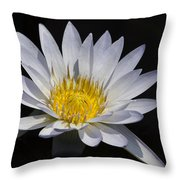 Light Blue Water Lily Throw Pillow