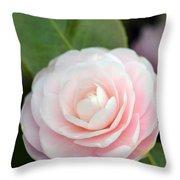 Light Pink Camellia Flower Throw Pillow