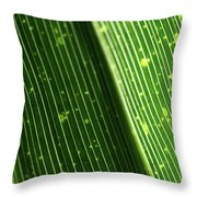 Light Shining Through Palm Frond Throw Pillow