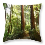 Light The Way - Redwood Forest Of Muir Woods National Monument With Sun Beam. Throw Pillow