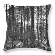 Light Up The Pine Throw Pillow