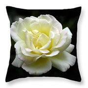 Light Yellow Rose 1 Throw Pillow