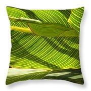 Lightplay Through The Leaves 3 Throw Pillow