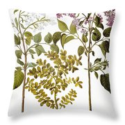 Lilac And Box, 1613 Throw Pillow