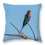Lilac Breasted Roller 5 Throw Pillow