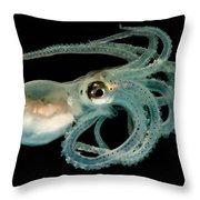 Lilliput Longarm Octopus Throw Pillow