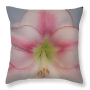 Lilly Soft Throw Pillow