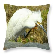 Lillywhite Throw Pillow