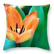 Lily #4 Throw Pillow