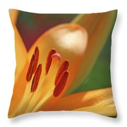 Lily - American Cheerleader 26 Throw Pillow