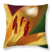 Lily - American Cheerleader 29 Throw Pillow