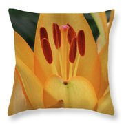 Lily - American Cheerleader 31 Throw Pillow