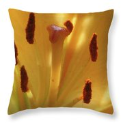 Lily - American Cheerleader 36 Throw Pillow