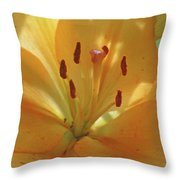Lily - American Cheerleader 38 Throw Pillow