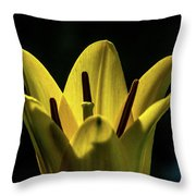 Lily And Sunshine Throw Pillow