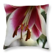 Lily Beauty Throw Pillow