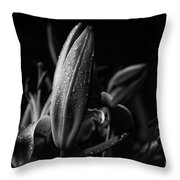 Lily Bud At Night Throw Pillow