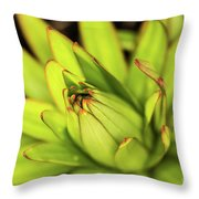 Lily Bud Throw Pillow