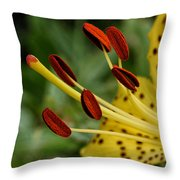 Lily Center Throw Pillow by William Selander