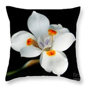 Lily Fusion 3 Throw Pillow