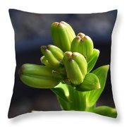 Lily Growth  Throw Pillow
