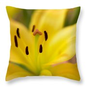 Lily In Close-up Throw Pillow