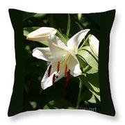 Lily Of White Throw Pillow