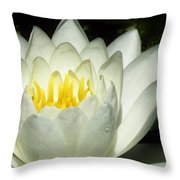Lily White  Throw Pillow by Lori Frisch