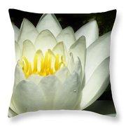 Lily White  Throw Pillow