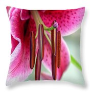 Lily Wishes Throw Pillow