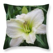 Lime Frost - Daylily Throw Pillow