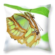 Lime Greens Throw Pillow