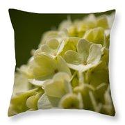 Lime Hydrangea Throw Pillow