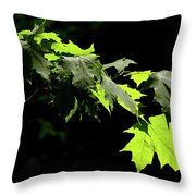 Limelighted Maples Throw Pillow