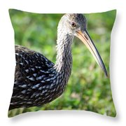 Limpkin Checking For Snails. Throw Pillow