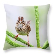 Lincoln's Sparrow Throw Pillow