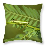 Linear Winged Grasshopper Throw Pillow