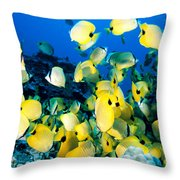 Lined Butterflyfish Throw Pillow