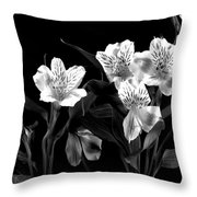 Lined Up Throw Pillow by Diane Reed
