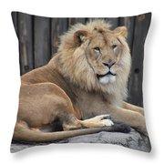 Lion 2 Throw Pillow