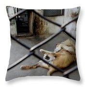Lion At Zoo Throw Pillow
