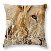 Lion Considering Irish Tartare Throw Pillow