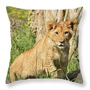 Lion Cub 2 Throw Pillow