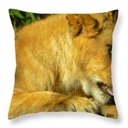 Lion Cub - What A Yummy Snack Throw Pillow