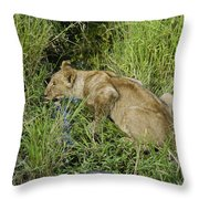 Lion In A Cool Glade Throw Pillow