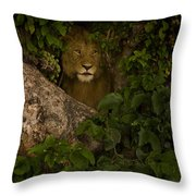 Lion In A Tree-signed Throw Pillow