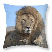 Lion On Mound Throw Pillow
