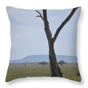 Lion Under Tree Throw Pillow