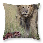 Lion With Kill Throw Pillow